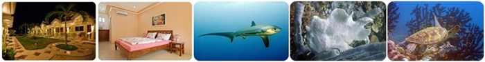 diving malaoascua island thresher sharks